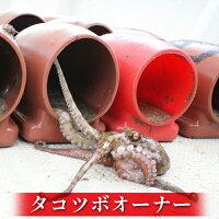 【ふるさと納税】タコツボオーナー【魚貝類・蛸・たこ・明石たこ】お届け:2021年7月15日〜2021年8月31日