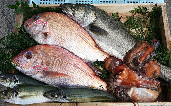【ふるさと納税】明石浦直送 旬の鮮魚BOX年4回コース 【魚貝類・魚介類・魚】