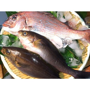 【ふるさと納税】A070*淡路島産 天然真鯛とイサキのセット