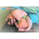 【ふるさと納税】EC03*淡路島産 白いちご『淡雪』 冷凍