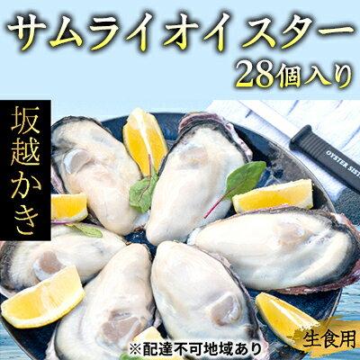 坂越かき 殻付き27個(牡蠣ナイフ・軍手付き)サムライオイスター 【魚貝類・生牡蠣・かき・カキ・シーフード】 お届け:2019年12月上旬〜2020年4月末