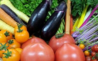 【ふるさと納税】はっぱやの旬野菜おまかせセット 【野菜類・セット・詰合せ】