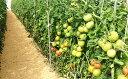 【ふるさと納税】加西とまと(2019年度産)【野菜類/トマト・やさい】お届け:2019年5月下旬〜年7月上旬