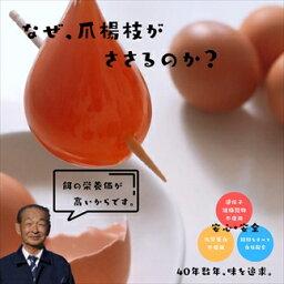 【ふるさと納税】丹波奥郷の卵 やまぶき45個+破卵保障3個