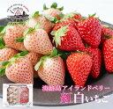 【ふるさと納税】淡路島アイランドベリー 紅白いちご 淡雪/紅