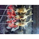 【ふるさと納税】AR1 鮎の塩焼7匹