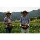 【ふるさと納税】200 ファームビジット(収穫体験)ランチつ...