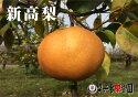 新高梨大玉5kg(5〜8個入)