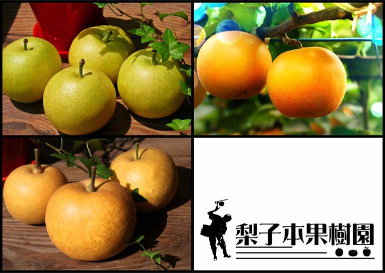 【ふるさと納税】梨子本果樹園の梨(幸水、二十世紀、豊水、詰め合わせいずれか:品種指定可)10kg (17〜26個入)※着日時はご指定いただけません8月下旬から順次発送:奈良県五條市