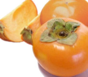 【ふるさと納税】 奈良の富有柿(約7.5kg)※着日時はご指定いただけません