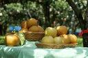 【ふるさと納税】梨子本果樹園の梨(二十世紀、豊水、詰め合わせいずれか)7.5kg(13〜20個入)※着日時はご指定いただけません9月上旬〜10月上旬順次発送・・・
