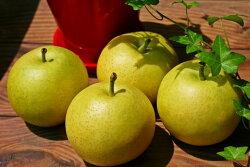 【ふるさと納税】梨子本果樹園の梨(二十世紀、豊水、詰め合わせいずれか)7.5kg(13〜20個入)※着日時はご指定いただけません9月上旬〜10月上旬順次発送・・・ 画像1