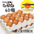 【ふるさと納税】さかもと養鶏の白鳳卵60個(30個入×全2回配送)