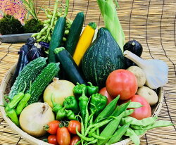 【ふるさと納税】産地直送!新鮮とれたて季節の旬野菜セット 画像2