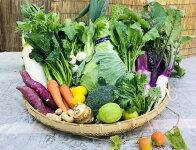 産地直送!新鮮とれたて季節の旬野菜セット
