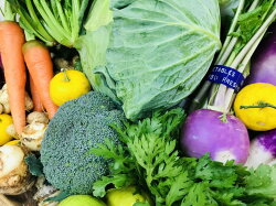 【ふるさと納税】産地直送!新鮮とれたて季節の旬野菜セット 画像1
