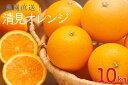 【ふるさと納税】清見オレンジ・ちょっと訳あり ご家庭用10k