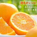 【ふるさと納税】清見オレンジ7.5kg・サイズお任せ まごこ