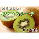 【ふるさと納税】【減農栽培】和歌山産キウィフルーツ約3kg(サイズ混合)