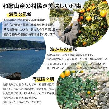 【ふるさと納税】5種みかんピュアジュースセット3