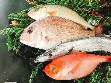 【ふるさと納税】太刀魚と旬の魚セット