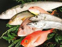 【ふるさと納税】太刀魚と旬の魚の大盛セット