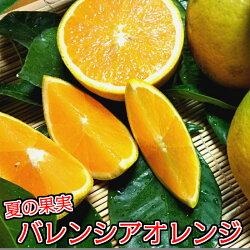 【ふるさと納税】バレンシアオレンジ