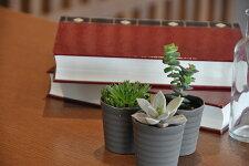 【ふるさと納税】植物10種セット