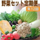 【ふるさと納税】定期便旬の新鮮野菜セットA【毎月お届け12回】たっぷり15品以上