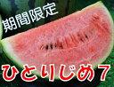 【ふるさと納税】和歌山産小玉すいか ひとりじめ7(2〜3玉)...