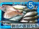 【ふるさと納税】御坊産 鮮魚セット5kg 鮮魚 天然 詰め合...