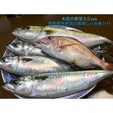 【ふるさと納税】御坊産鮮魚セット2.5kg【定期便】(年4回お届け)