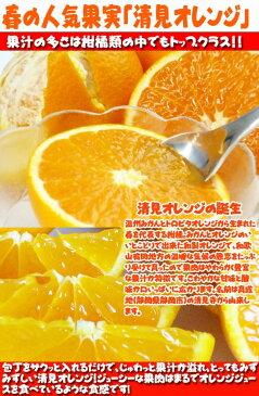 【ふるさと納税】【ご家庭用訳アリ】紀州有田産清見オレンジ 7.5kg 2021年3月下旬頃〜4月下旬頃発送予定