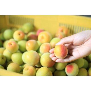 完熟オレンジ梅