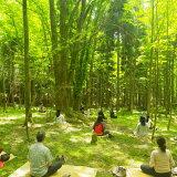 【ふるさと納税】高野山森林セラピー体験ツアー