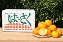 【ふるさと納税】和歌山産 有田のはっさく 10kg Lサイズ