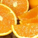 【ふるさと納税】■清見オレンジ[約5kg]和歌山県有田産春み...