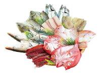 【ふるさと納税】魚鶴特上干物セット9種18枚
