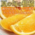 【ふるさと納税】希少な国産バレンシアオレンジ5kg