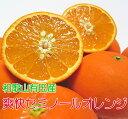 【ふるさと納税】厳選!!爽快セミノールオレンジ 16kg ★