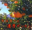 【ふるさと納税】有田育ちの濃厚ポンカン 16kg ★