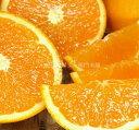 【ふるさと納税】■清見オレンジ[約4.5kg]湯浅町田村産春...