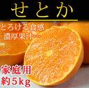 【ふるさと納税】■とろける食感!柑橘の大トロせとか約5kg(ご家庭用)※2020年2月上旬頃〜2020年2月中旬頃に順次発送予定