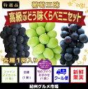【ふるさと納税】【厳選】葡萄三昧 高級ぶどう 味くらべミニセ...