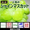 【ふるさと納税】【新鮮果実】人気のシャインマスカット 約3K...