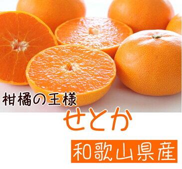 【ふるさと納税】柑橘の王様 せとか※3月上旬頃〜3月下旬頃に順次発送予定※沖縄地域へのお届け不可
