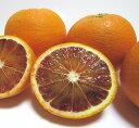 【ふるさと納税】【高級柑橘】【和歌山県産】濃厚ブラッドオレン...