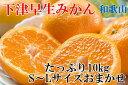 【ふるさと納税】和歌山下津の早生みかんたっぷり10kg(S〜...