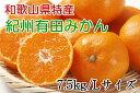 【ふるさと納税】(厳選)紀州有田みかん7.5kg(Lサイズ・...