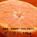 【ふるさと納税】特別栽培 ポンカン10kg      【発送時期指定可】【有機肥料100%・減農薬栽培の春みかんを農家直送】